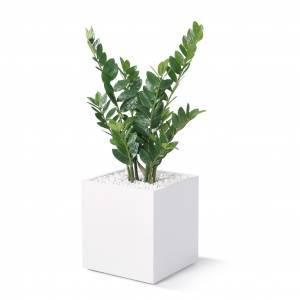 BM81092/kunstpflanze-zamifolia-h-900-mm-01.jpg