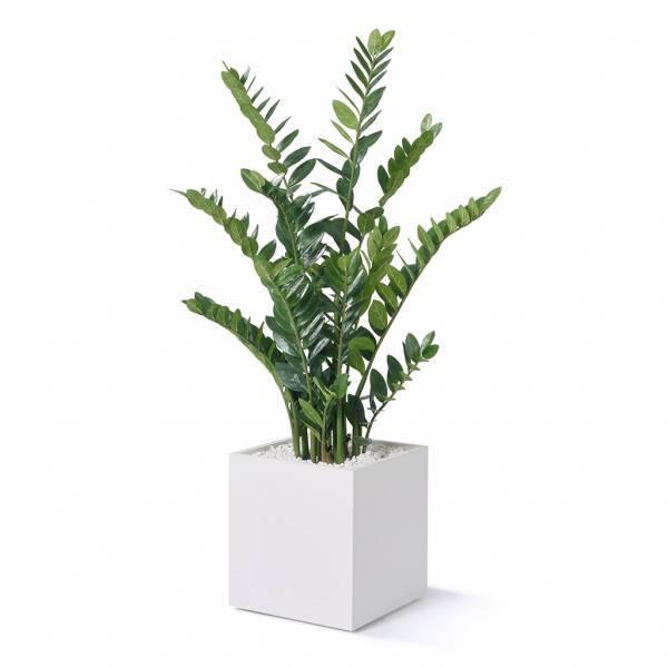 BM81093/kunstpflanze-zamifolia-h-1300-mm-01.jpg
